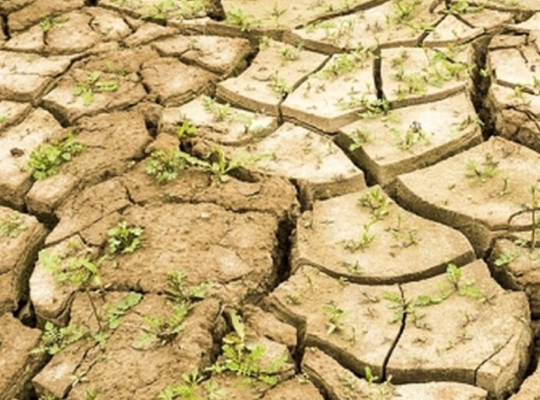 59 gemeenten engageren zich voor het klimaat